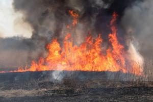 Wielkopolskie: Kolejny duży pożar zboża