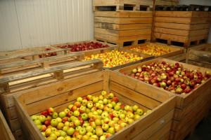 W polskich chłodniach są jeszcze pokaźne zapasy jabłek