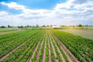 Uprawy ekologiczne muszą być korzystne dla środowiska i klimatu