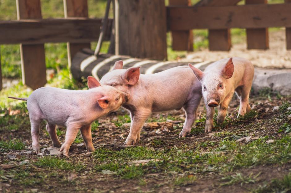Producenci materiału biologicznego piszą do ministra rolnictwa