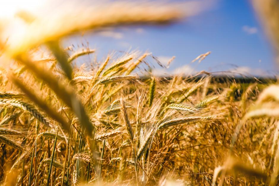 Pogoda pozwoliła wielu rolnikom dokończyć żniwa