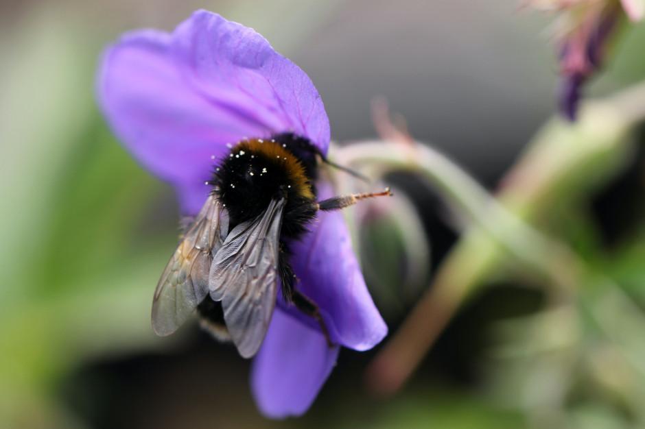 Zapach wytwarzany przez owady drapieżne zamiast pestycydów?