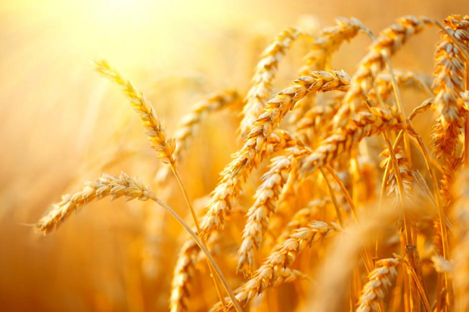Sytuacja na rynku zbóż coraz bardziej napięta