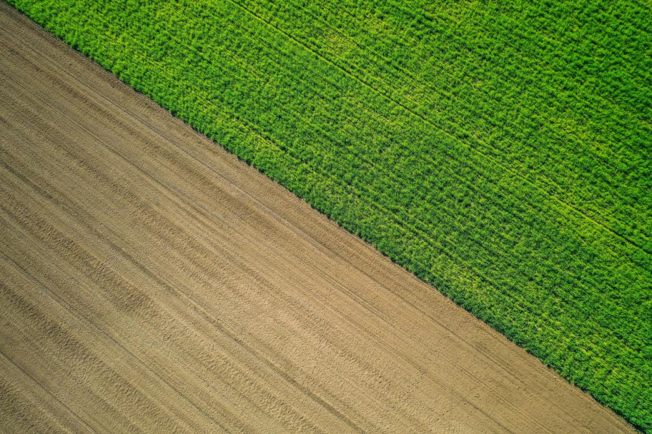 Średni czynsz dzierżawny w I półroczu br. wyniósł 15,1 dt/ha