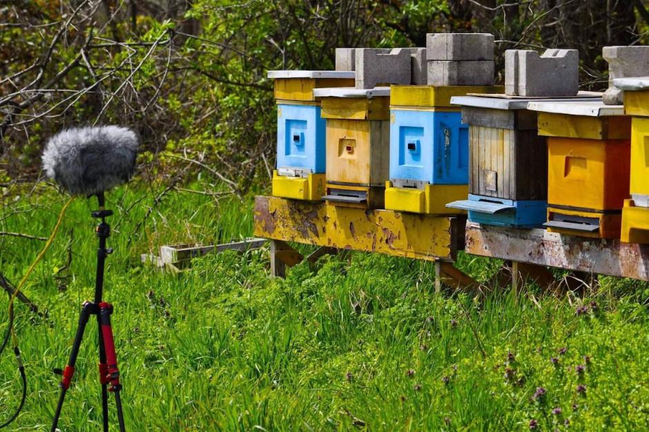 UPW bada komunikację pszczół