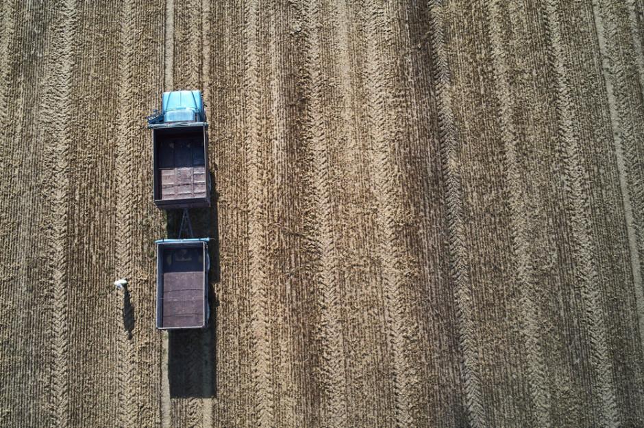Mniejsza prognoza światowej produkcji zbóż