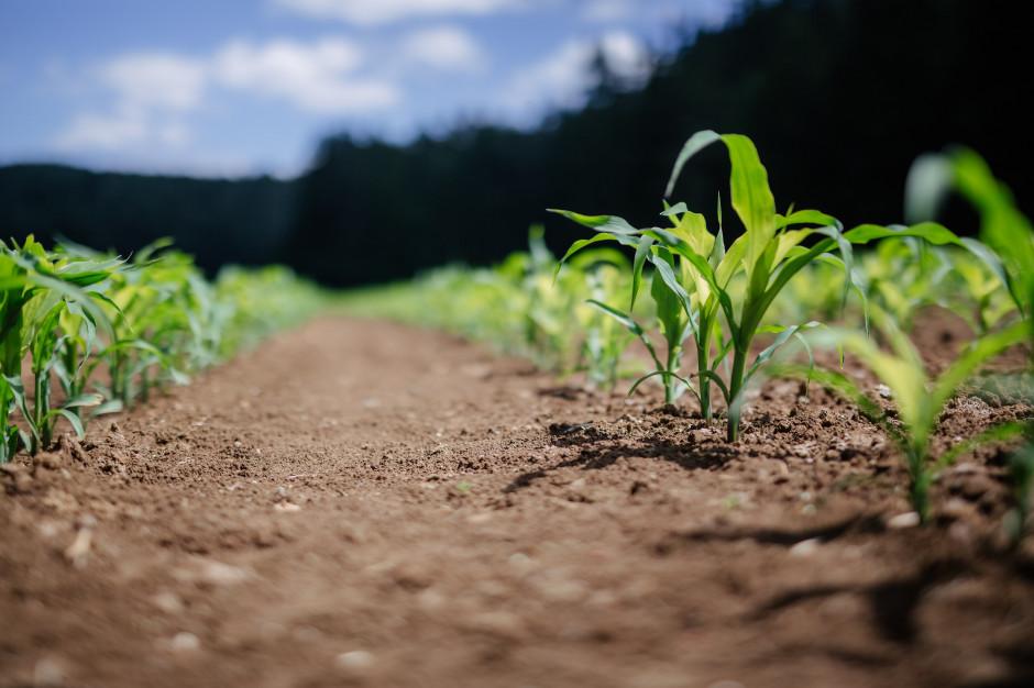 Rolnictwo zrównoważone to stabilność finansowa gospodarstwa
