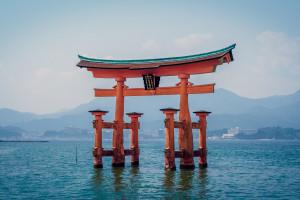 Japonia: Trzy grzyby sprzedane za 7 tysięcy dolarów