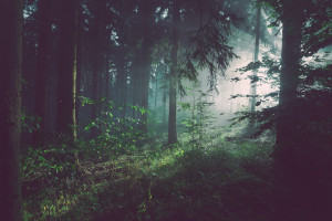 Zlikwidowano kolejną leśną bimbrownię na Podlasiu