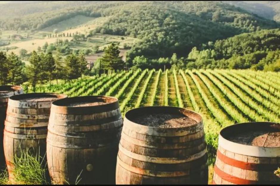 Winnice w walce ze zmianami klimatu, czyli zrównoważony rozwój a wino