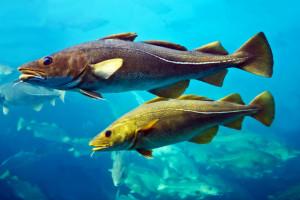Ceny ryb popłyną