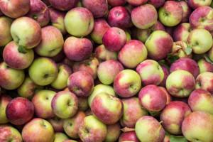 Firmy handlowe i grupy proponują sadownikom niskie ceny za jabłka