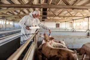 Podkarpacie: Samorząd pomoże rolnikom w związku z ASF
