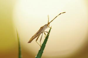 Brit wprowadza do Polski karmy z jadalnych owadów