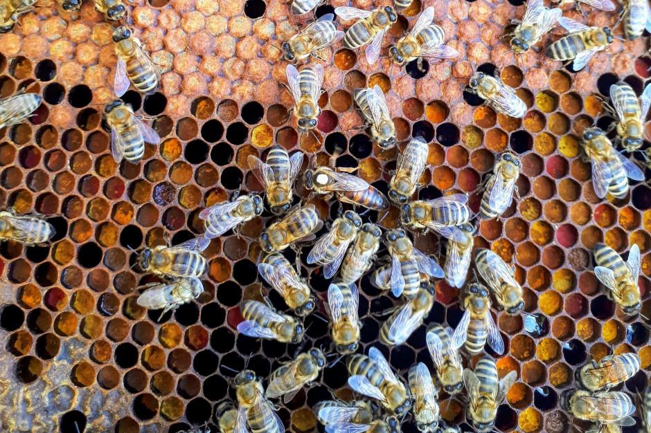 190 mln zł dla pszczelarstwa w latach 2015-2021
