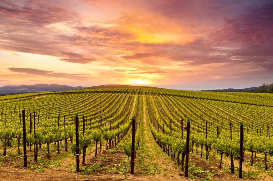 Wyzysk pracowników sezonowych w winnicach na terenie UE