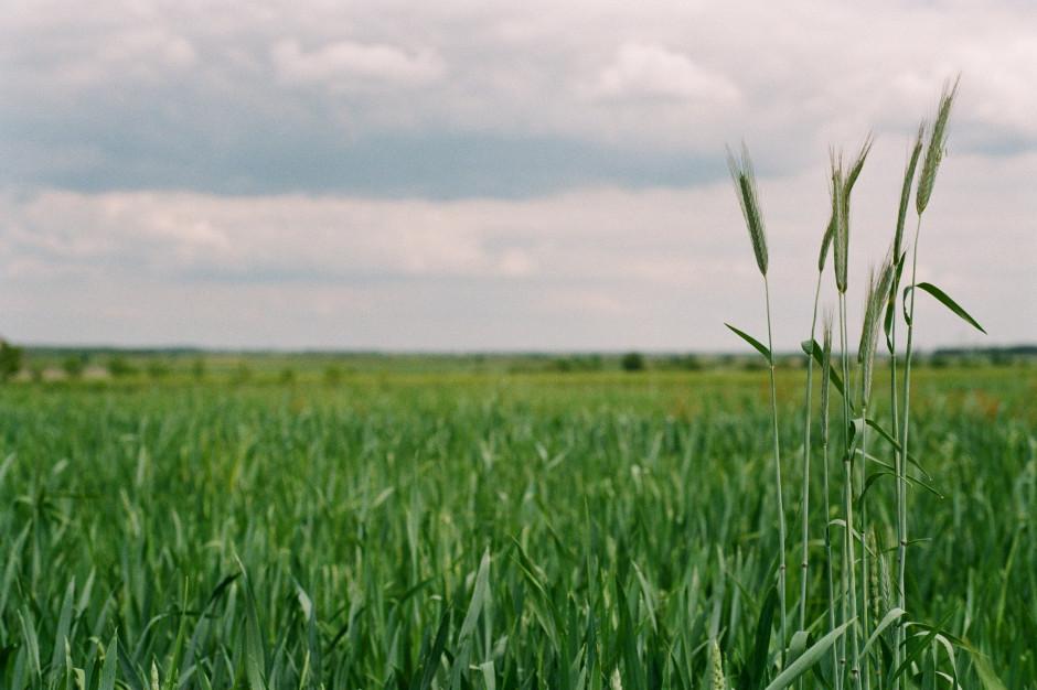 Kukiz: pakiet rolny będzie procedowany w październiku i listopadzie