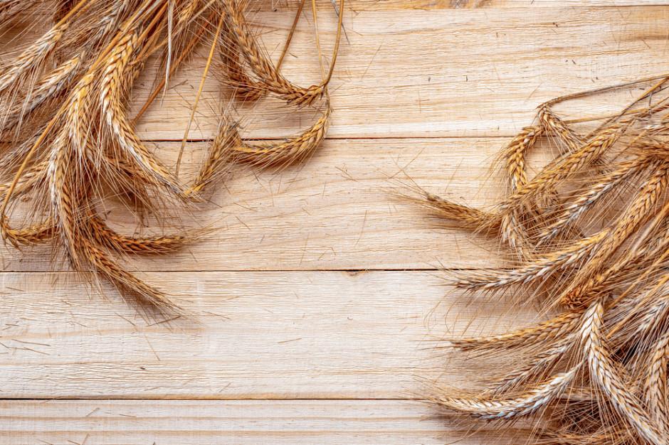 Produkcja zbóż w 2021 nie zapobiegnie spadkowi światowych zapasów
