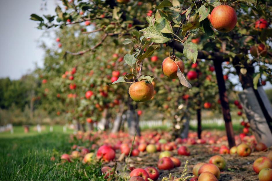 Uprawa owoców i warzyw nieopłacalna? Rolnicy zastanawiają się nad jej sensem