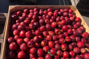 Na rynku jabłek jest wiele do poprawienia