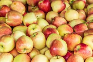 Sadownicy nie chcą interwencyjnego skupu jabłek?