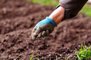 Przez wzrost cen nawozów ucierpią mniejsze gospodarstwa