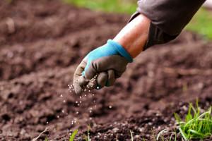 Produkcja nawozów azotowych we wrześniu wzrosła o 3,2 proc. rdr