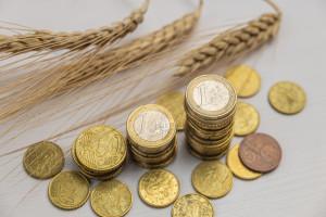 Ceny pszenicy ponownie wzrosły