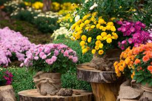 Wszystkich Świętych: Na Broniszach ruch na rynku kwiatów