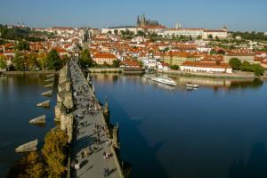 Czechy wciąż nie mogą uwolnić się od ptasiej grypy