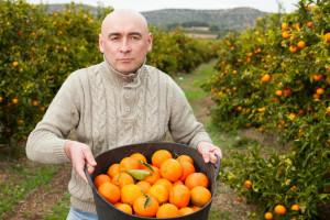 Działkowcy będą mogli handlować żywnością? Jest projekt ustawy