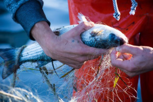 Francja i Wielka Brytania wciąż walczą w sprawie połowów
